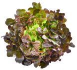 Bio Red Oak Leaf Lettuce