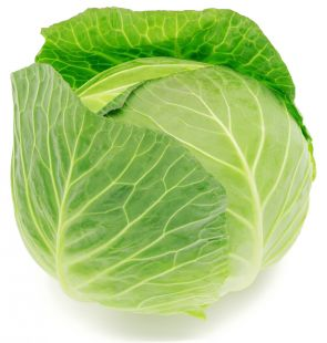 White Cabbage