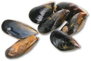 Mussels Extra